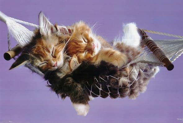 sleeping cats
