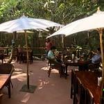 Big Tree Cafe outside garden